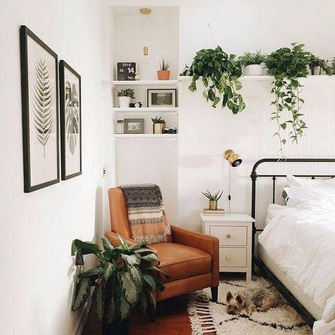 piante in camera da letto ecco quali scegliere il