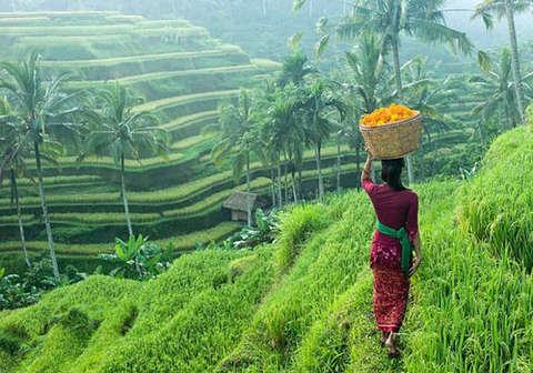 Risultati immagini per risaie ubud