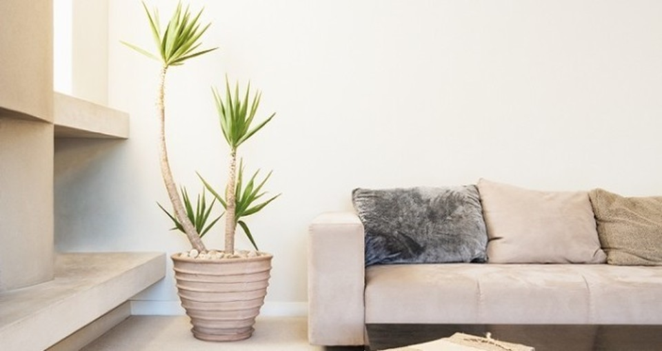 Le piante che purificano la casa il for Piante da interno alte